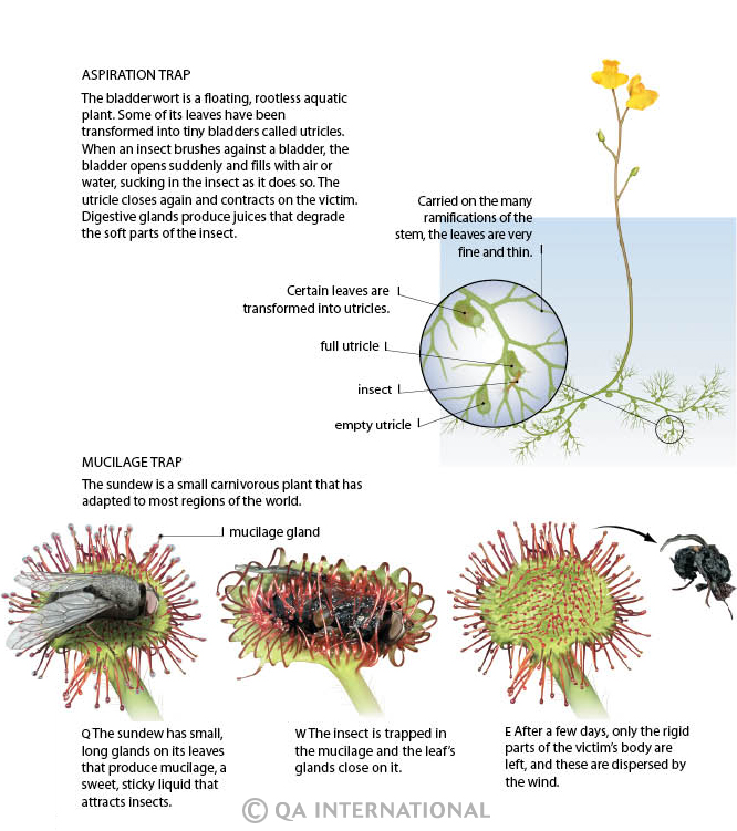 what are heterotrophic plants what are the different types