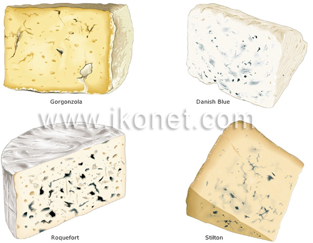 The classification of cheeses | Visual Dictionary