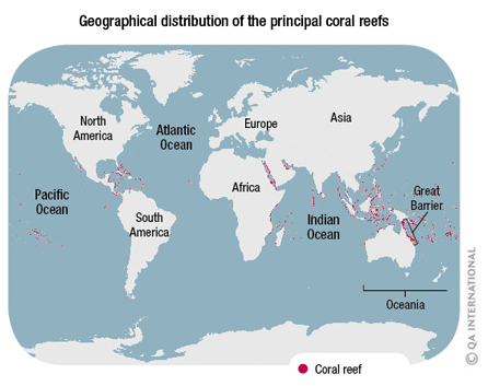 The coral reefs a rainbowcolored world  Visual Dictionary