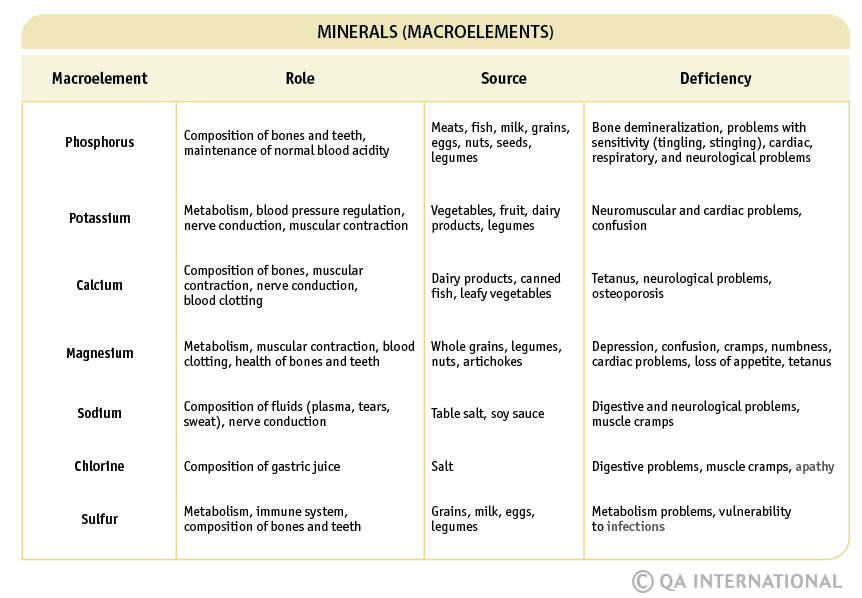 Nutrients: essential to good health! (2nd part) | Visual