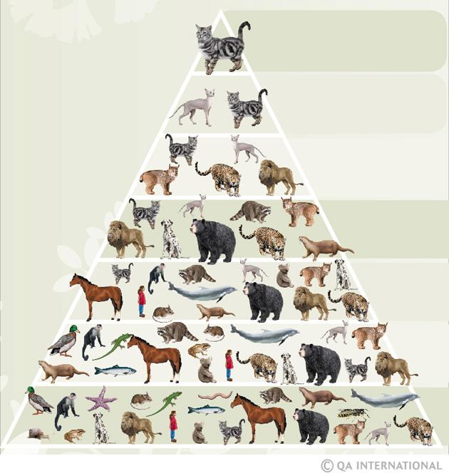 Taxonomic Nomenclature House Cat