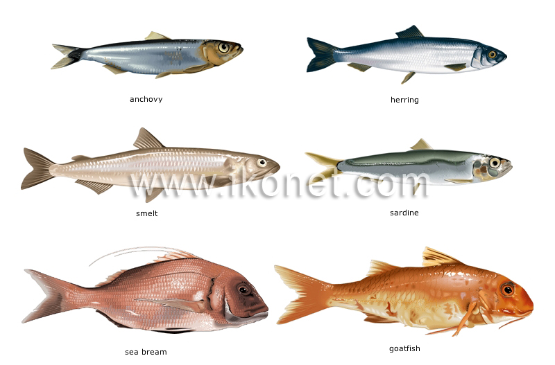 Food and kitchen food bony fishes image visual for Types of bony fish