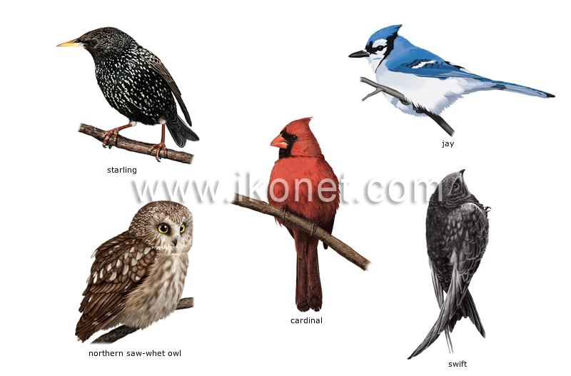 Examples Of Insectivores examples of birds image