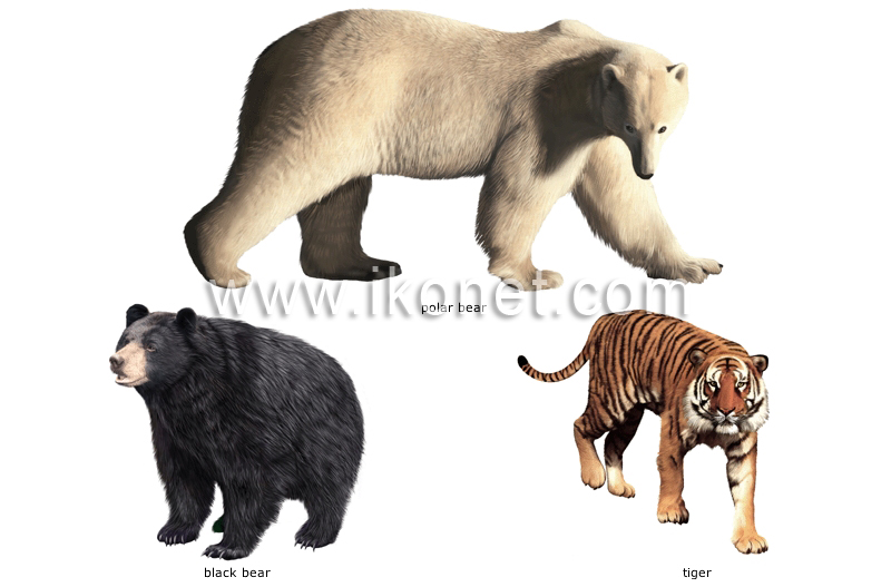 Carnivores animals pictures with names.