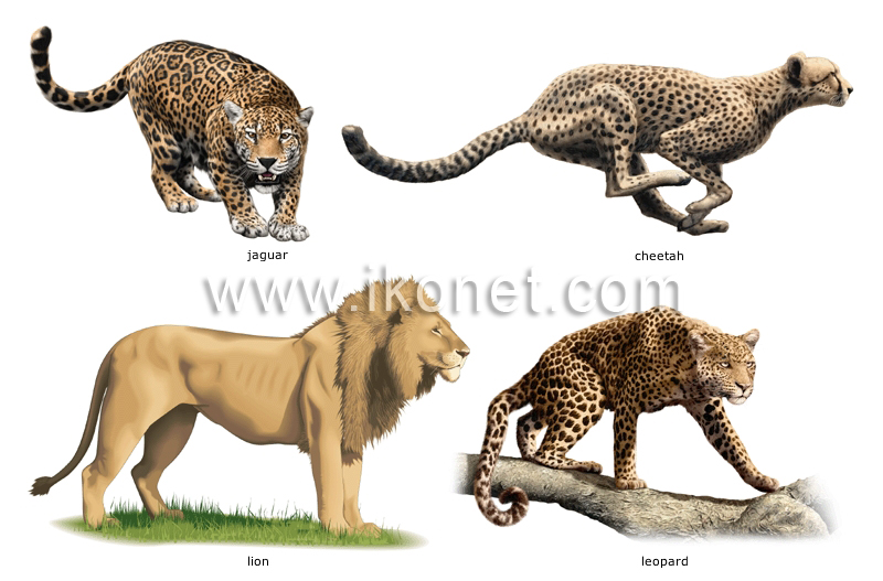 Examples Of Animals