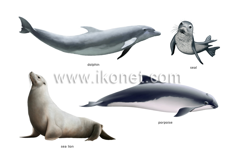 an analysis of the dolphin species the mammals of the sea