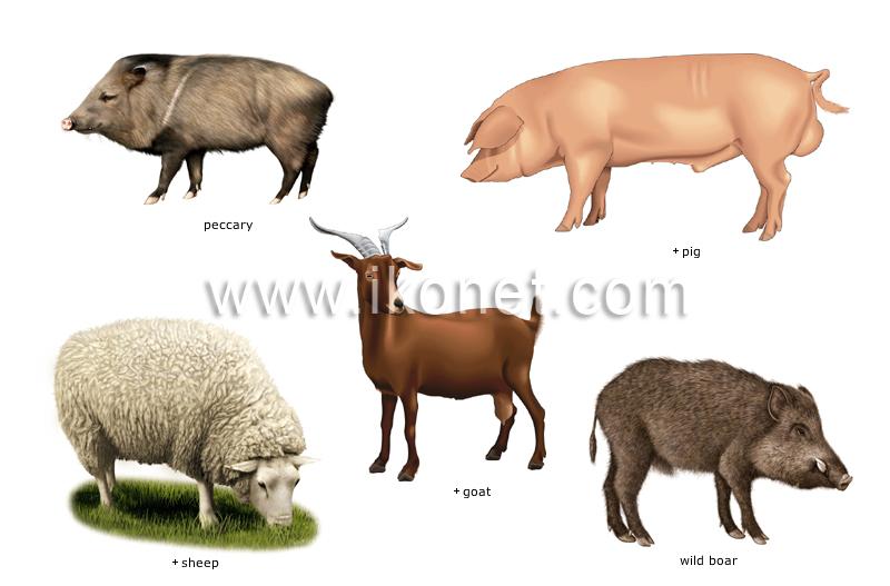 Examples Of Ungulate Mammals