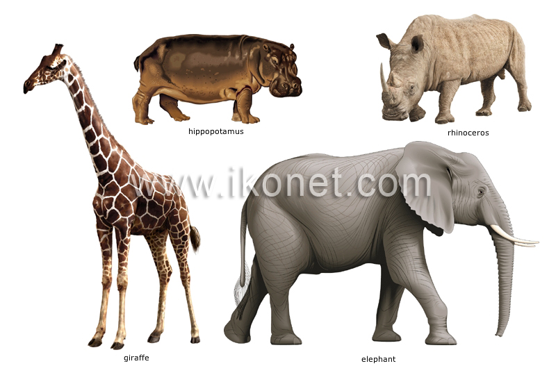 N Ungulate animal kingdom > un...