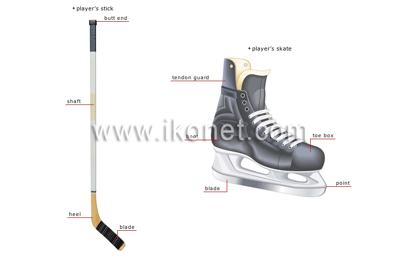 the importance of wearing protective gear and checking for injuries in ice hockey Please check your internet connection or reload this page ice hockey essay examples the importance of wearing protective gear and checking for injuries in.