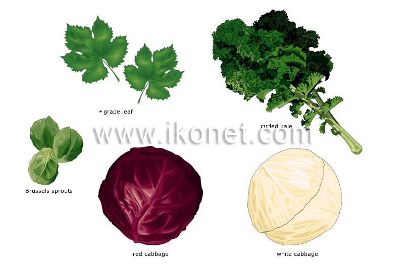 food and kitchen > food > vegetables > leaf vegetables image ...