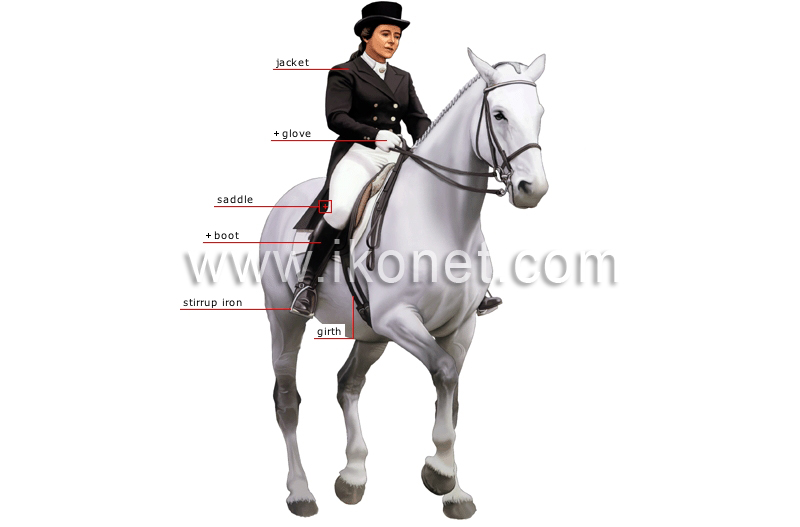 sports and games > equestrian sports > dressage > rider
