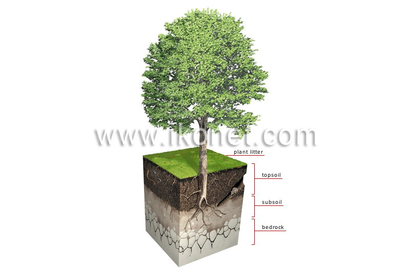 Vegetable kingdom plant soil profile image visual for Soil dictionary