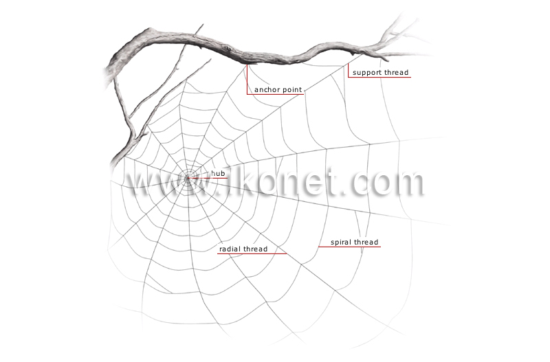 visual web spider