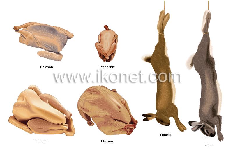Productos alimenticios y de cocina productos - Articulos de caza milanuncios ...