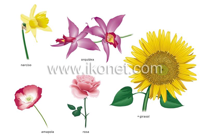 ejemplos de flores image