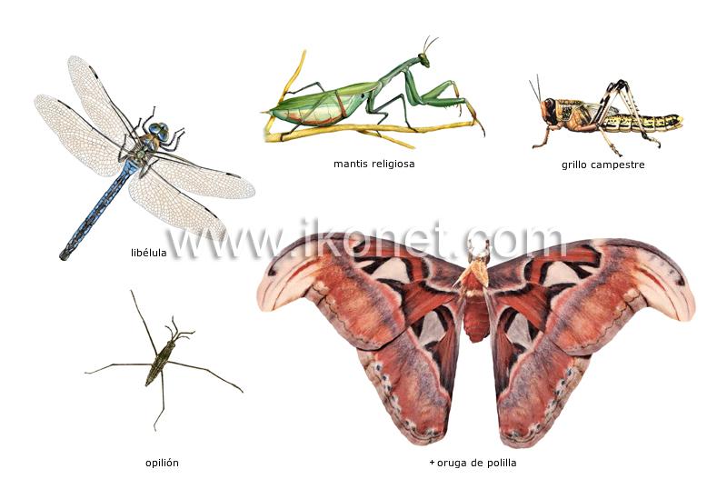 ejemplos de insectos image