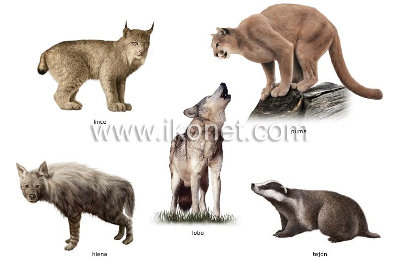 ... animal > mamíferos carnívoros > ejemplos de mamíferos carnívoros