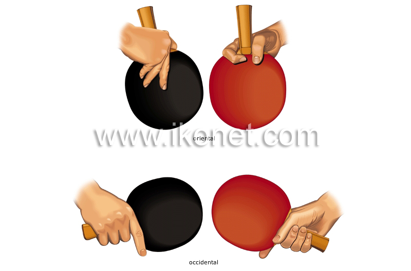 7889dc890d121 deportes y juegos   deportes de raqueta   tenis de mesa   formas de ...