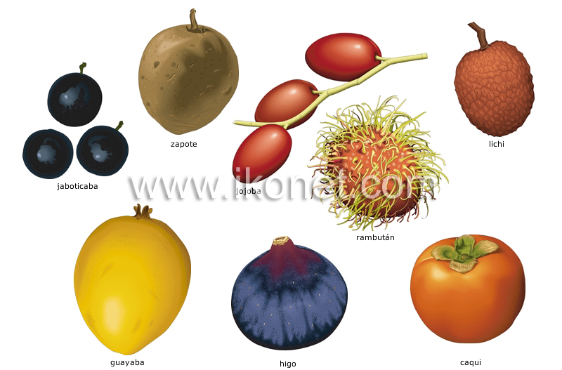 orange vegetables list