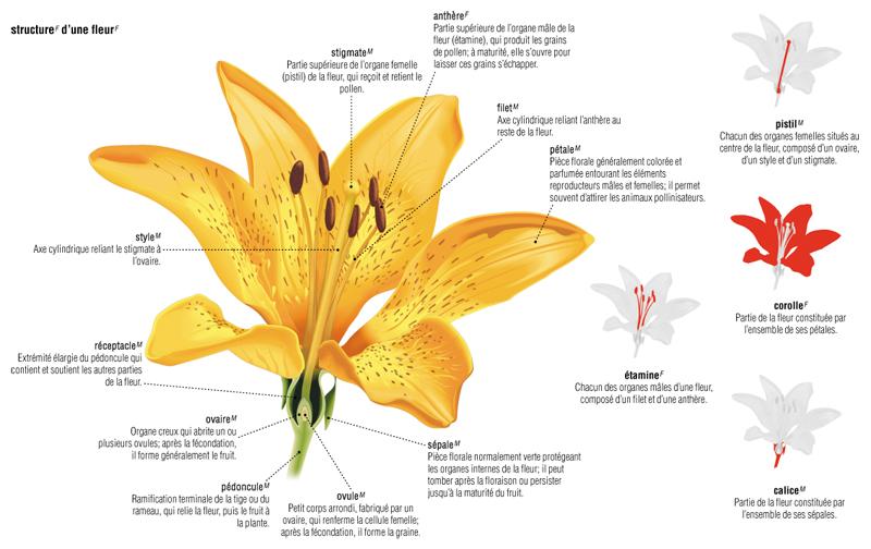 external image zoom-fleur.jpg