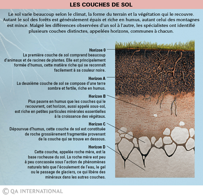 Six pieds sous terre une vie qui grouille for 6 layers of soil