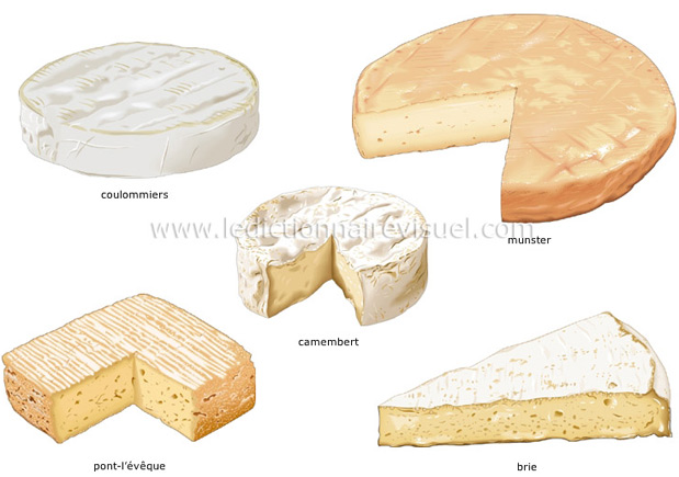 la classification des fromages dictionnaire visuel