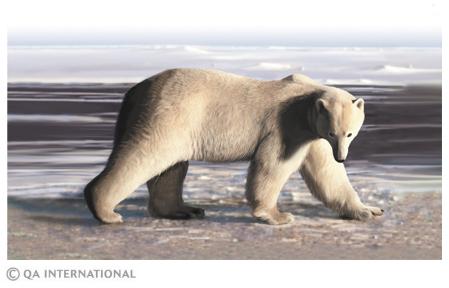 arctique animaux - Photo