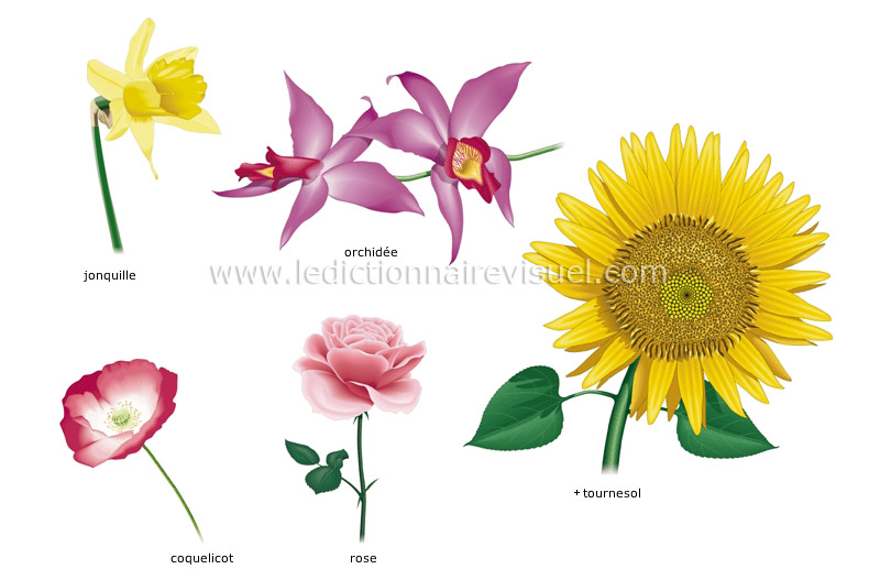 R gne v g tal fleur exemples de fleurs image for Vegetal en anglais