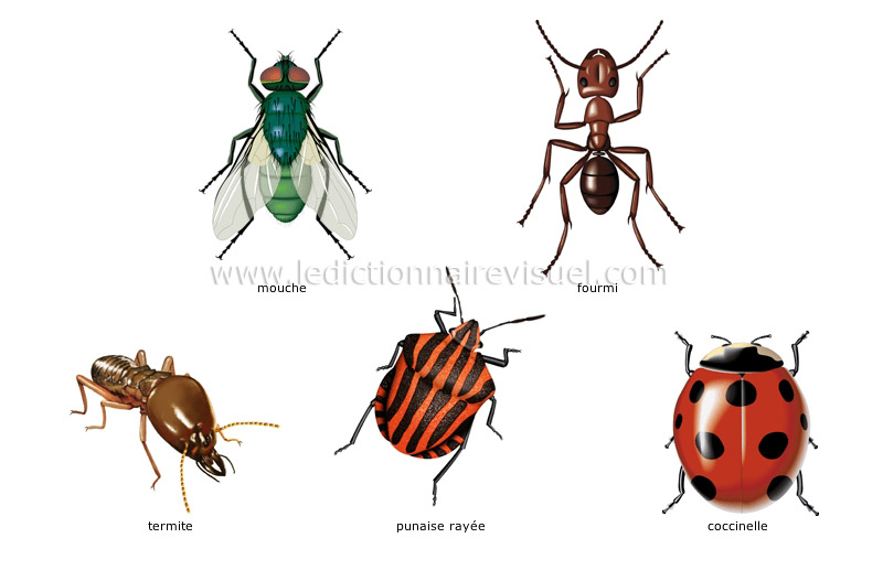 Exemples d'insectes image