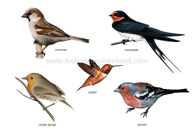 exemples d'oiseaux - Le Dictionnaire Visuel