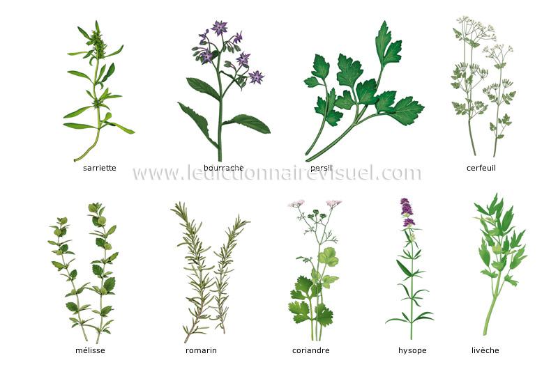 Alimentation Et Cuisine Alimentation Fines Herbes Image - Herbes aromatiques en cuisine