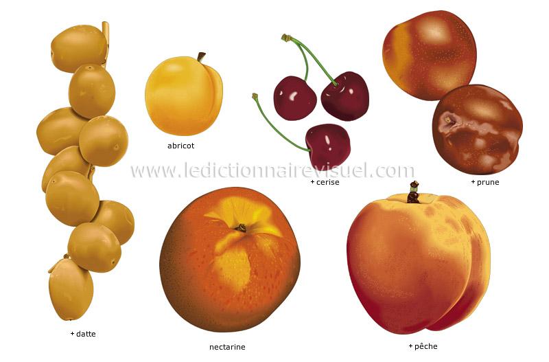 fruits à noyau - Le Dictionnaire Visuel