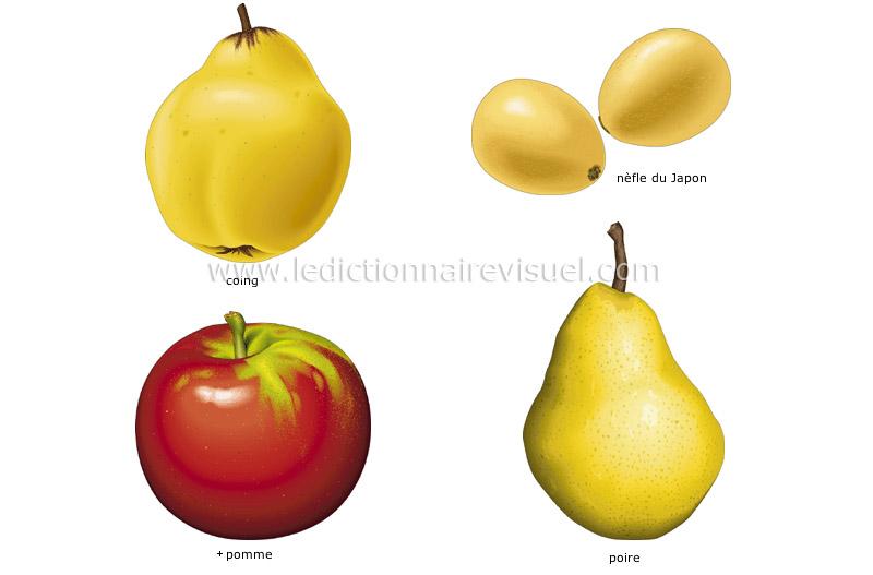 Fruit Commencant Par V. Excellent Wednesday With Goddard With Fruit ...