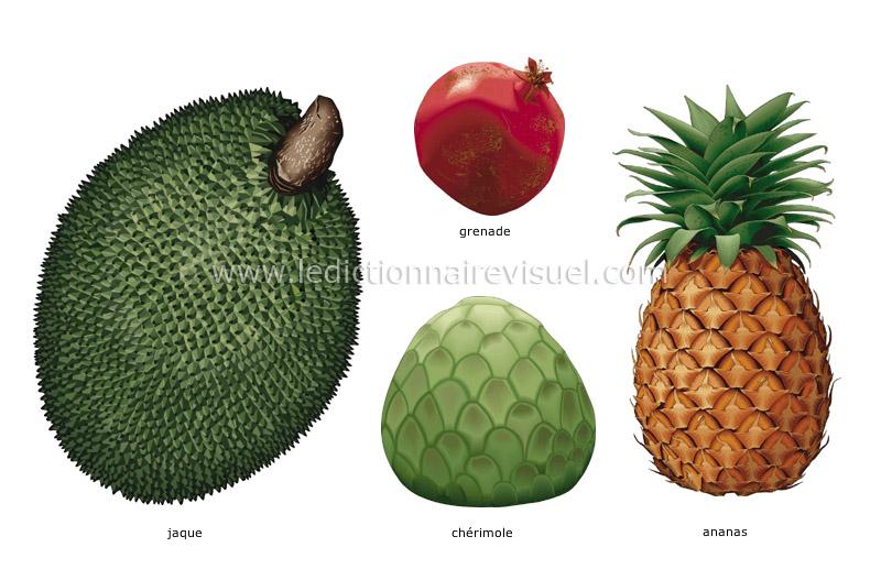 fruits tropicaux - Le Dictionnaire Visuel
