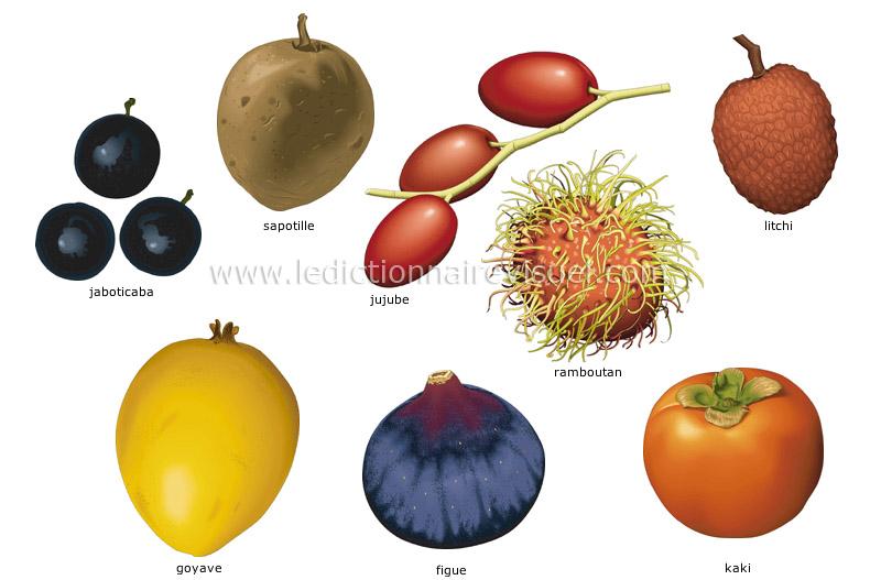 Alimentation et cuisine alimentation fruits fruits - Liste fruits exotiques avec photos ...