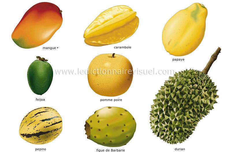 alimentation et cuisine alimentation fruits fruits tropicaux image dictionnaire visuel. Black Bedroom Furniture Sets. Home Design Ideas