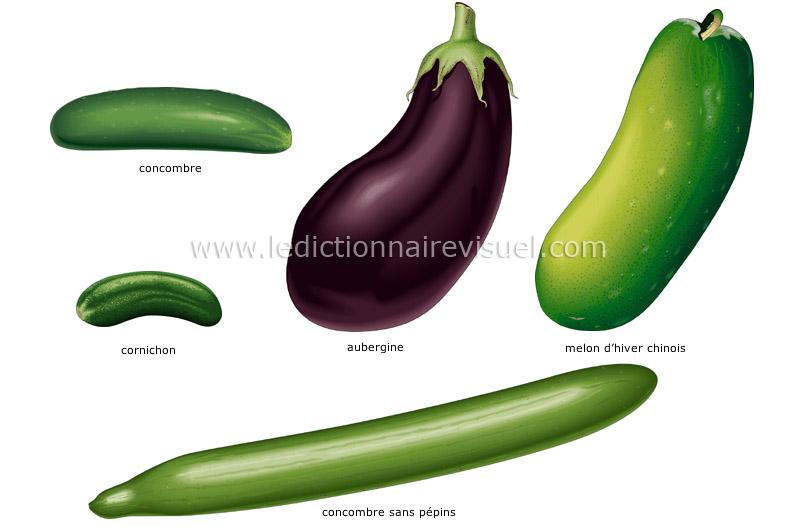 L gumes fruits dictionnaire visuel - Difference fruit et legume ...
