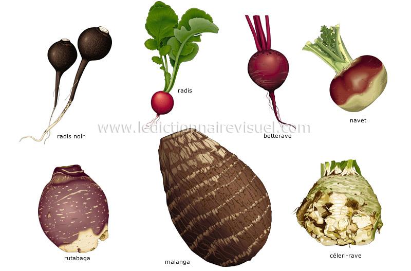 légumes racines - Le Dictionnaire Visuel