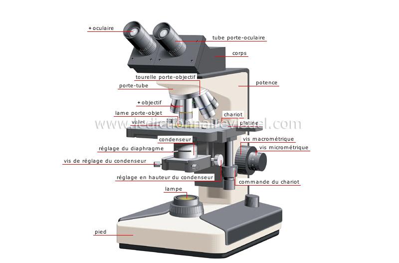 Microscope binoculaire image