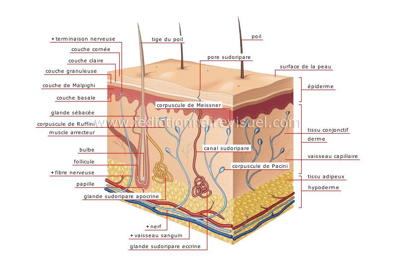 Les moyens pour le nettoyage des pores de peau de la personne