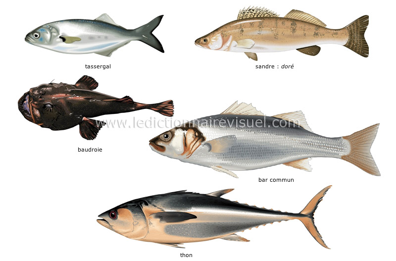Poisson alimentation for Distribution nourriture poisson