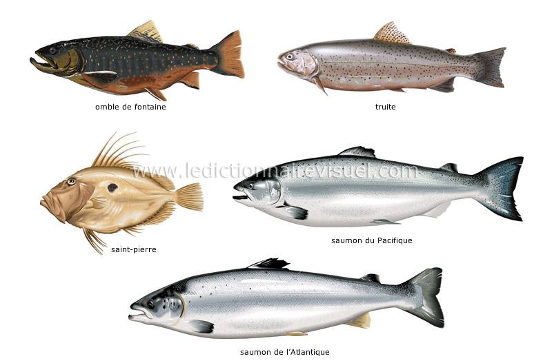 exemple de poisson osseux