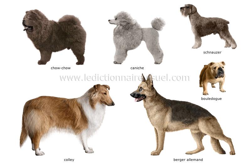 Education Canine : Techniques De Dressage Canin - 20 astuces à savoir - Facilement