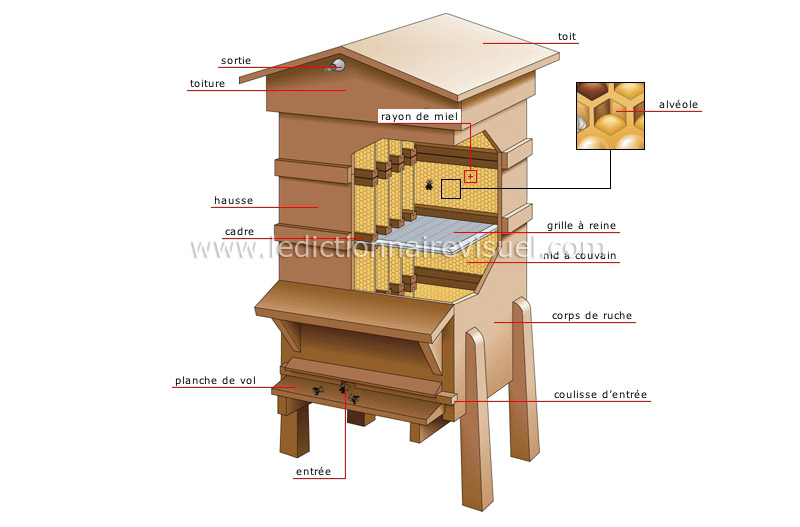 R gne animal insectes et arachnides abeille ruche - Comment faire fuire les abeilles ...