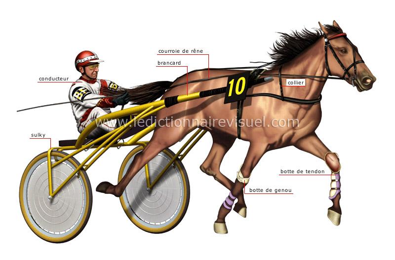 """Résultat de recherche d'images pour """"image des chevaux de course"""""""
