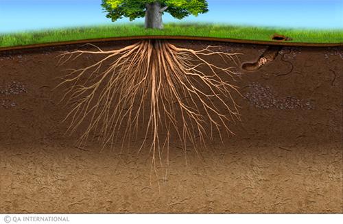 Six pieds sous terre une vie qui grouille - Jeux de tronconneuse qui coupe les arbres ...